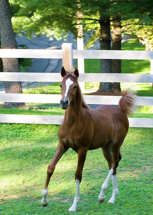 Horse Greeting Card featuring the photograph Colt by Michael Barry
