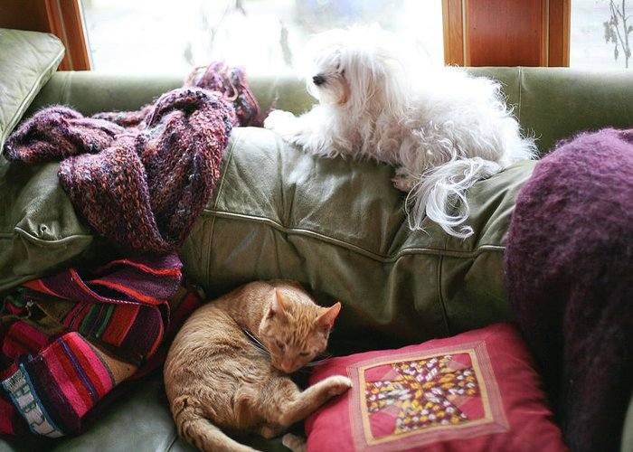 Animals Greeting Card featuring the photograph Comfy Bella And Cat by Liz Santie