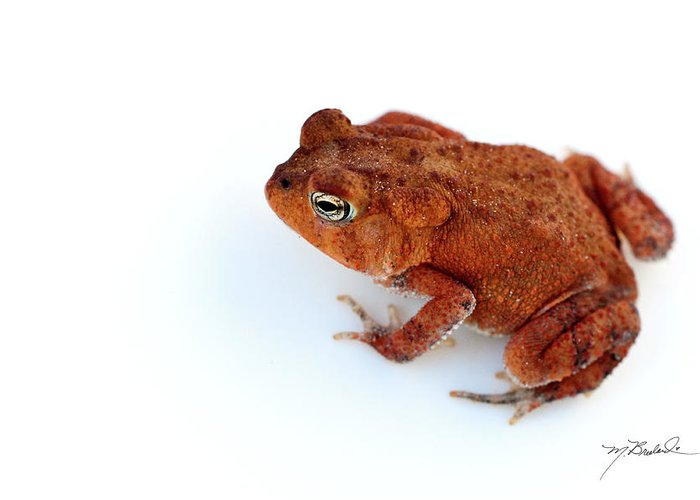 Toad Greeting Cards