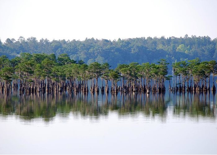 Florida Panhandle Greeting Card featuring the photograph Compass Lake by Peter McIntosh