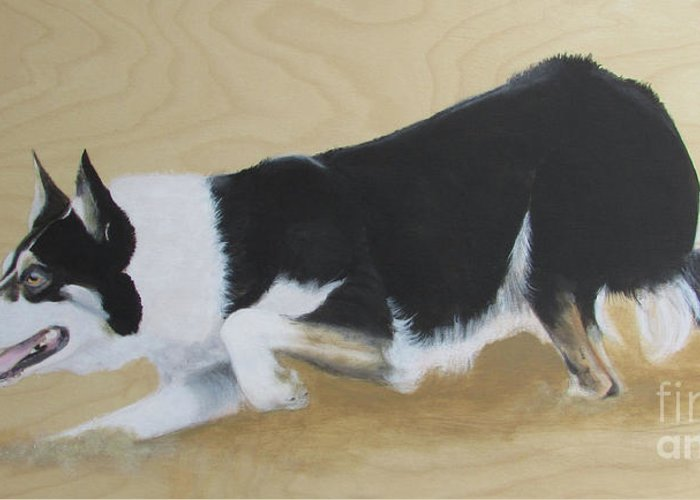 Border Collie Greeting Card featuring the painting Concentration by Janice M Booth