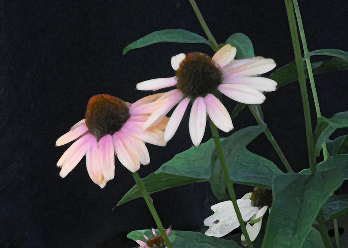 Coneflower Greeting Card featuring the photograph Coneflowers by Catherine Sprague