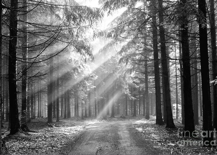 Black And White Greeting Card featuring the photograph Conifer Forest In Fog by Michal Boubin