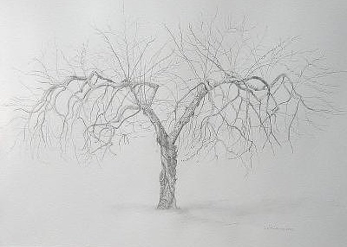 Cortland Apple Tree Greeting Card featuring the drawing Cortland Apple by Leah Tomaino