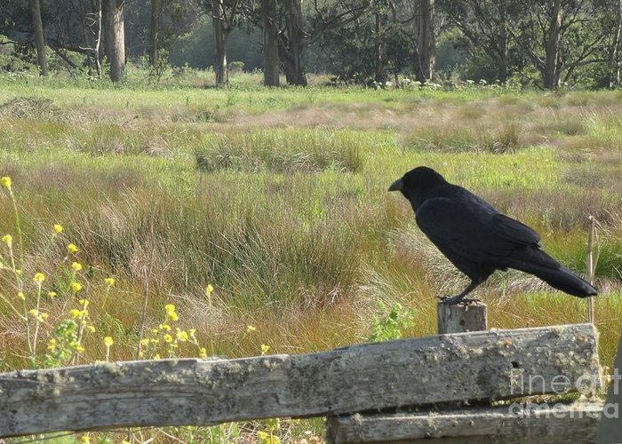 Crow Greeting Card featuring the photograph Corvus by Juan Romagosa