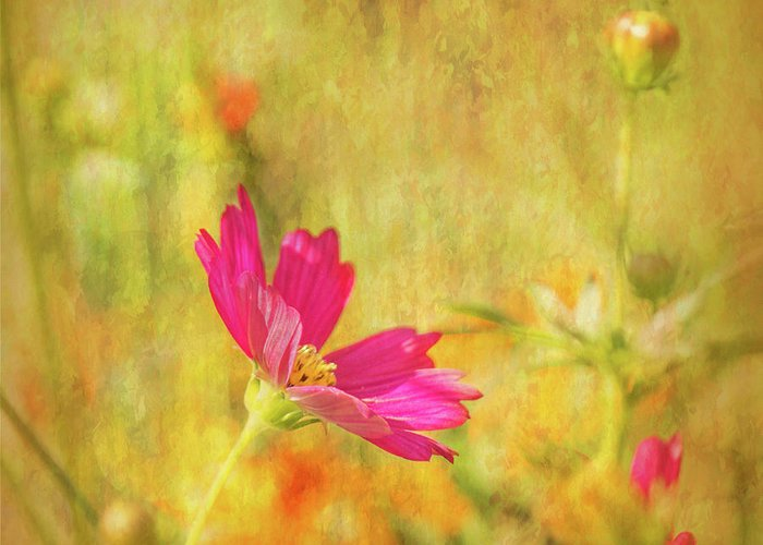 Pink Cosmos Greeting Card featuring the photograph Cosmos Art I by Mary Bellew