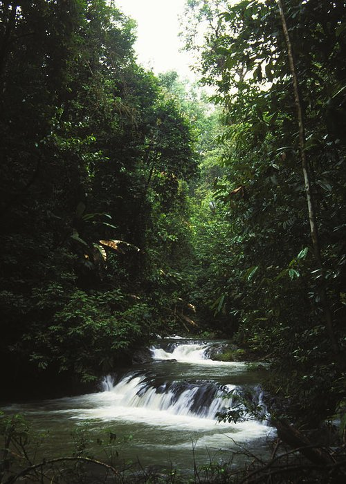 Costa Rica Greeting Card featuring the photograph Costa Rica Waterfall In The Carocavado by James Forte