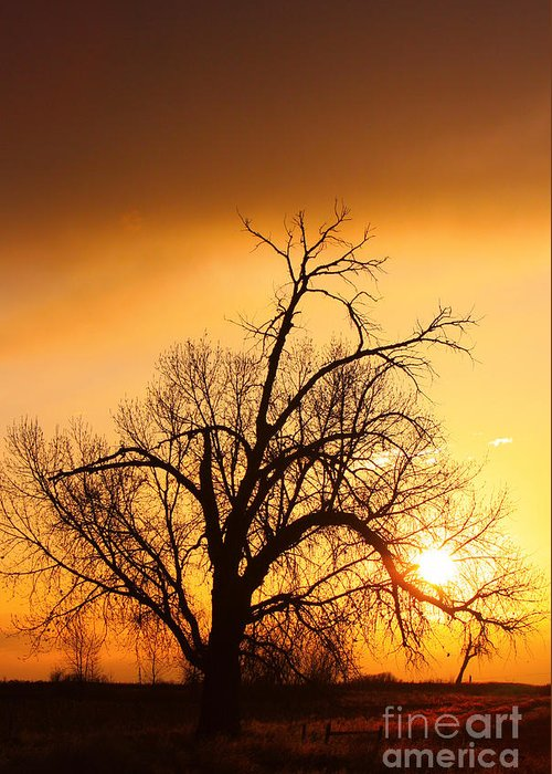 Sunrise Greeting Card featuring the photograph Cottonwood Sunrise - Vertical Print by James BO Insogna