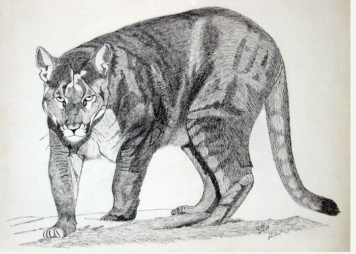 Cougar Greeting Card featuring the drawing Cougar by Daniel Shuford