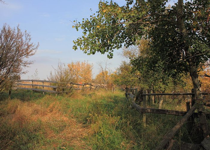 Farm Greeting Card featuring the photograph Country Lane by Jim Sauchyn