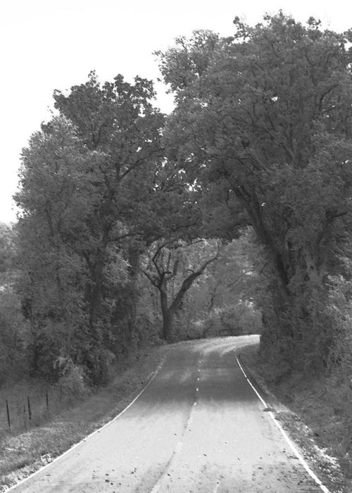 Trees Greeting Card featuring the photograph Country Road by Audrey Venute