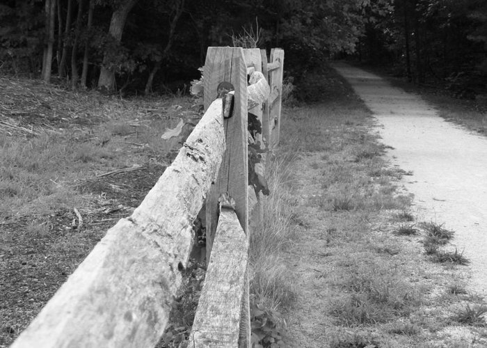 Nature Greeting Card featuring the photograph County Fence by D R TeesT