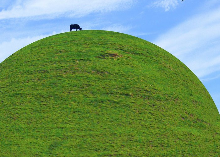 Black Cow Greeting Card featuring the photograph Cow Eating On Round Top Hill by Mike McGlothlen