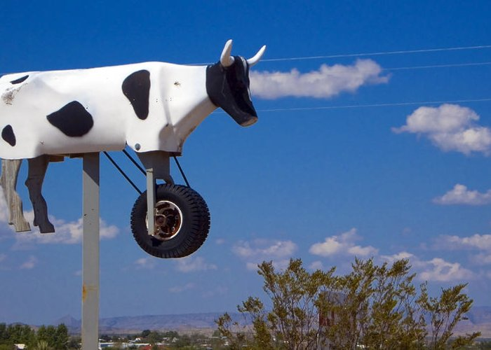 Cow Greeting Card featuring the photograph Cow Power by Skip Hunt