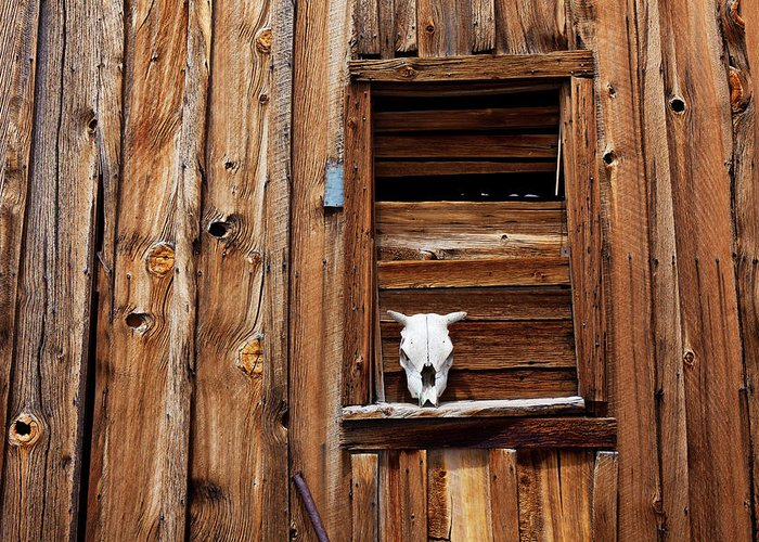 Cow Skull Greeting Card featuring the photograph Cow Skull In Wooden Window by Garry Gay