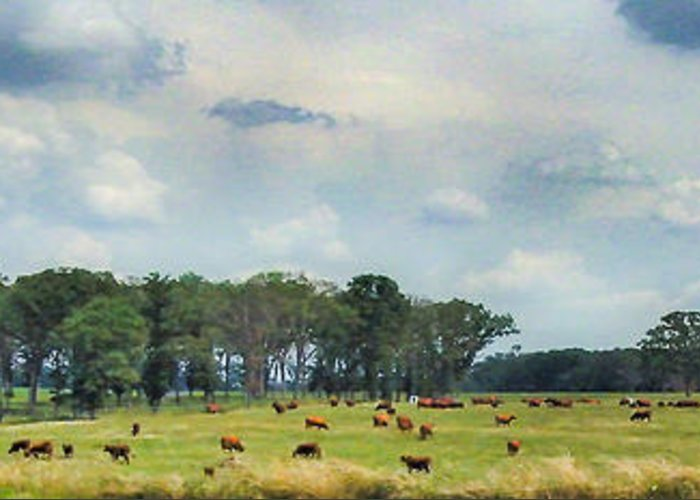Cows Greeting Card featuring the photograph Cows 02 by Doug Mathewson