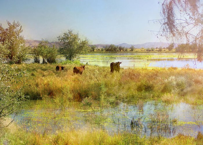 Fallon Greeting Card featuring the photograph Cows In The Desert by Karen W Meyer