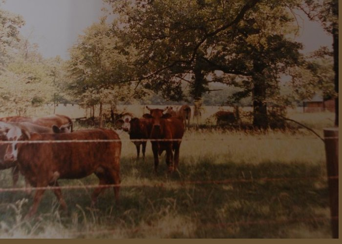 Cows Greeting Card featuring the photograph Cows by Rob Hans