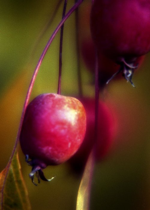 Macro Greeting Card featuring the photograph Crabapple by Lee Santa