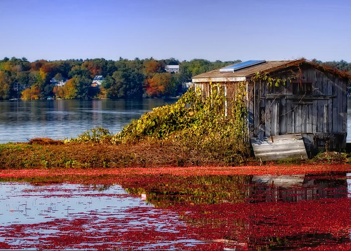 Cape Cod Greeting Card featuring the photograph Cranberry Bog Farm II by Gina Cormier