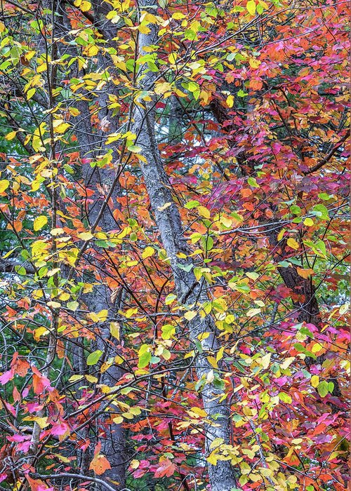 Fall Foliage Greeting Card featuring the photograph Cranberry Orange by Diane Moore