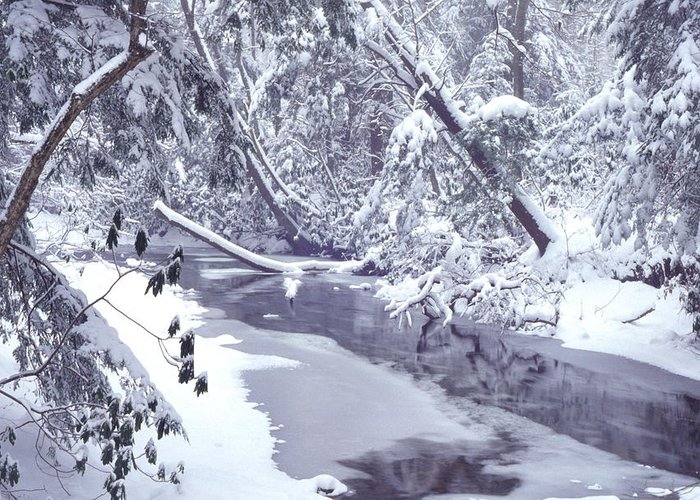 Usa Greeting Card featuring the photograph Cranberry River Winter Heavy Snow by Thomas R Fletcher