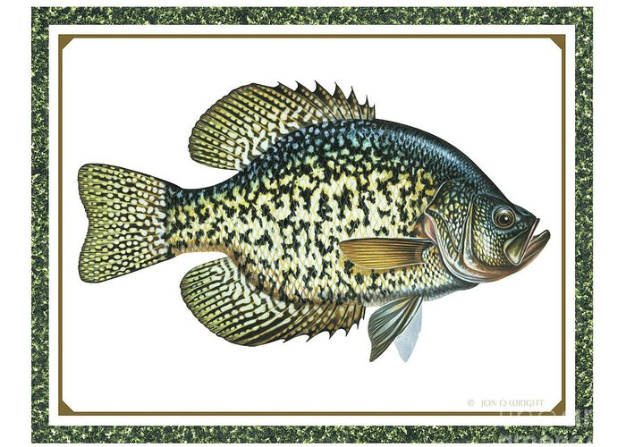 Jon Q Wright Greeting Card featuring the painting Crappie Print by JQ Licensing