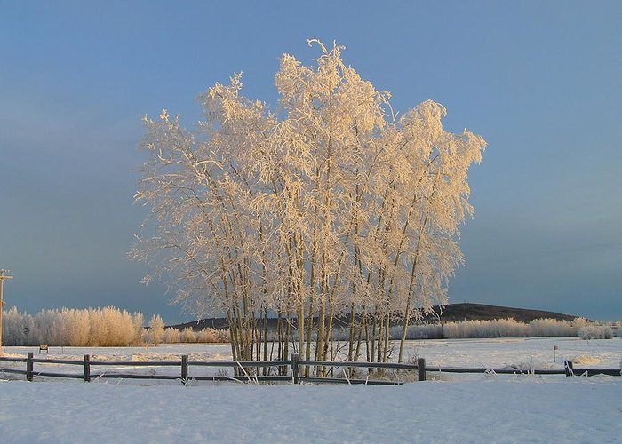Snow Greeting Card featuring the photograph Creamer Field by Louise Magno