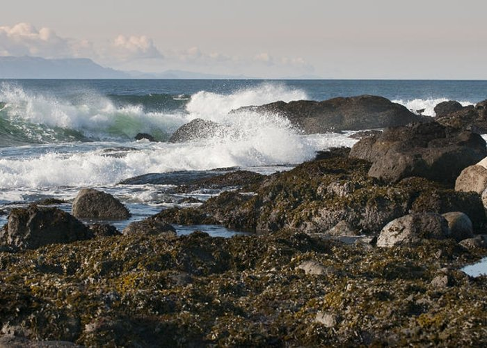 Waves Greeting Card featuring the photograph Creating Waves by Chad Davis