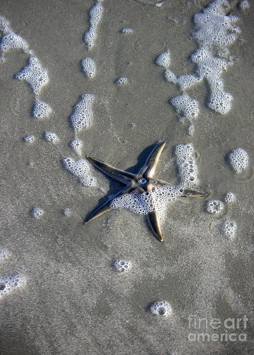 Nature Greeting Card featuring the photograph Creatures Of The Gulf - A Fallen Star by Lucyna A M Green