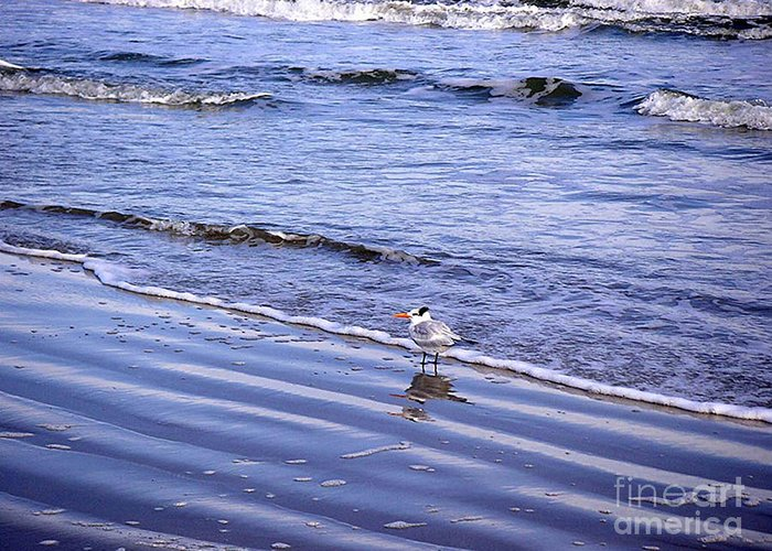 Nature Greeting Card featuring the photograph Creatures Of The Gulf - Seaing And Wading by Lucyna A M Green