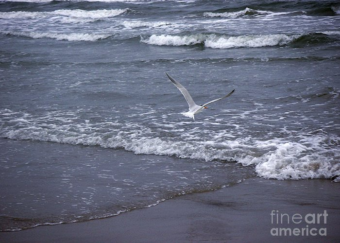 Nature Greeting Card featuring the photograph Creatures Of The Gulf - Tranquility by Lucyna A M Green