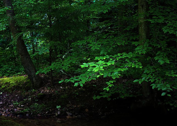 Ron Jones Greeting Card featuring the photograph Creek Bank by Ron Jones