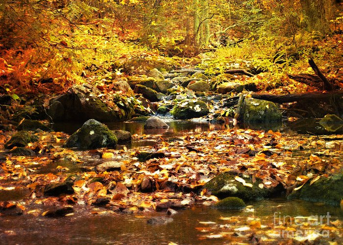 Fall Photographs Greeting Card featuring the photograph Creek In The Woods by Kathy Jennings