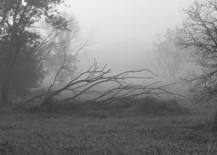 Fog Greeting Card featuring the photograph Creeping Branches by Lauri Novak
