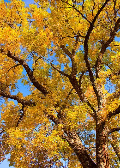 Giant Greeting Card featuring the photograph Crisp Autumn Day by James BO Insogna