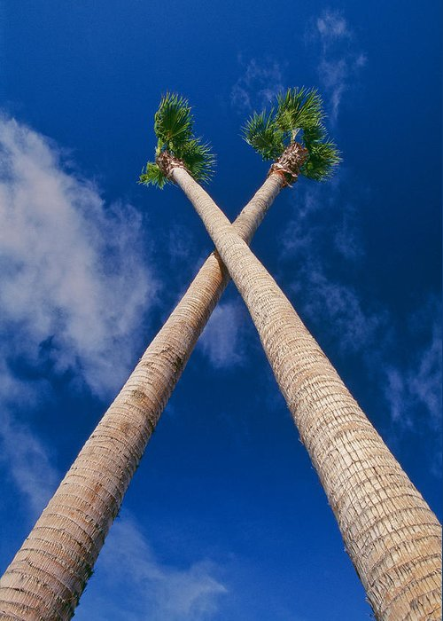 Blue Sky Greeting Card featuring the photograph Crossed Palm Trees by Rich Iwasaki