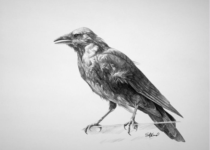 Crows Greeting Cards
