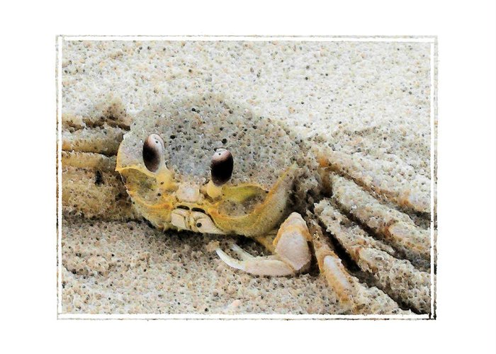 Crab Greeting Card featuring the photograph Crusty by Robert Boyette