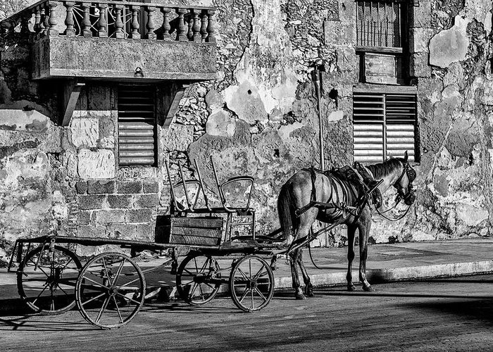 Cuban Horse Power; Cuban; Horse; Power; Horse And Carriage; Carriage; Hp; Cuba; Photography & Digital Art; Photography; Photo; Photo Art; Art; Digital Art; 2bhappy4ever; 2bhappy4ever.com; 2bhappy4evercom; Tobehappyforever; Greeting Card featuring the photograph Cuban Horse Power BW by Erron