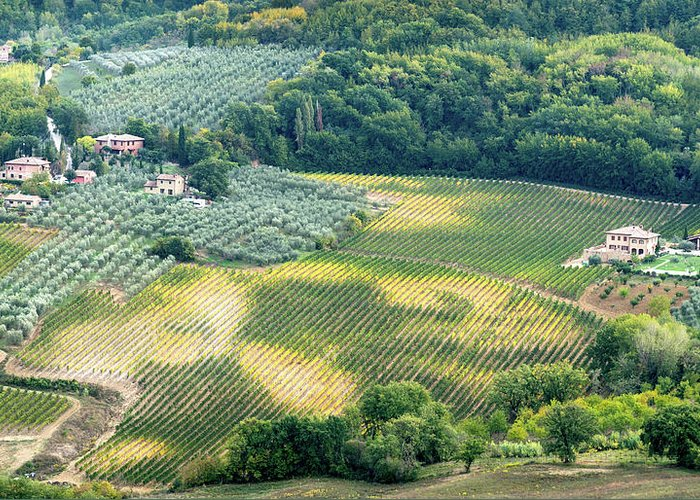 Michalakis Ppalis Greeting Card featuring the photograph Cultivated Vineyards Tuscany Italy by Michalakis Ppalis