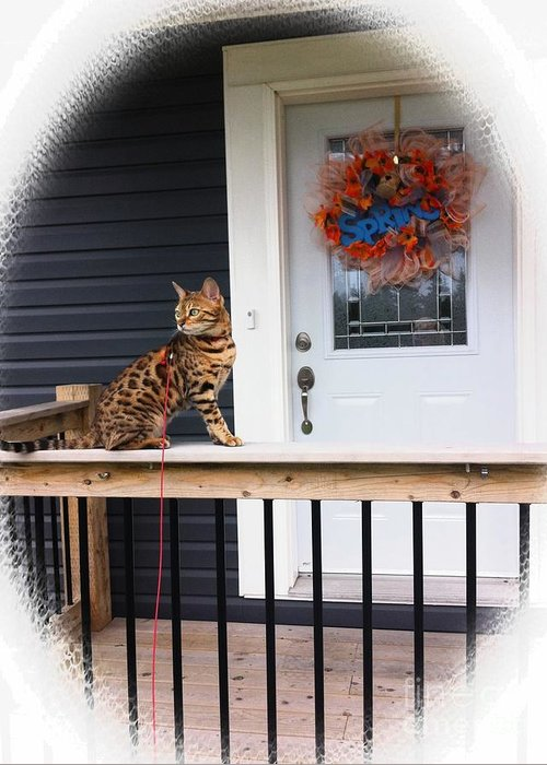 Curious Bengal Cat Greeting Card featuring the photograph Curious Bengal Cat by Barbara Griffin