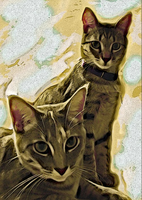 Cat Greeting Card featuring the photograph Curious Cats by David G Paul