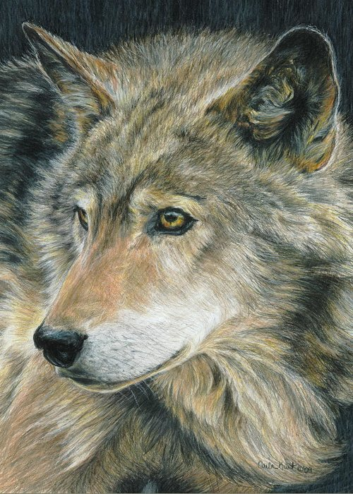 Wolf Greeting Card featuring the drawing Curious Eyes by Carla Kurt