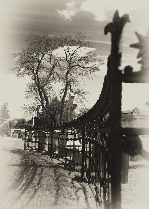Gate Greeting Card featuring the photograph Curved Gate by Scott Wyatt