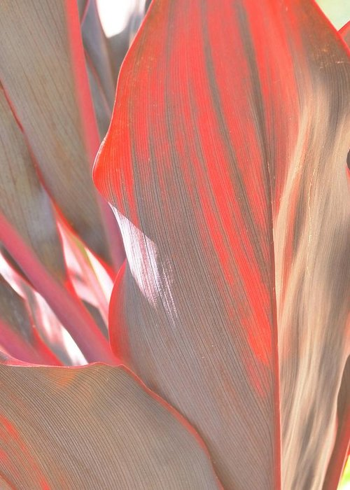 Abstract Greeting Card featuring the photograph Curves Ahead by Florene Welebny