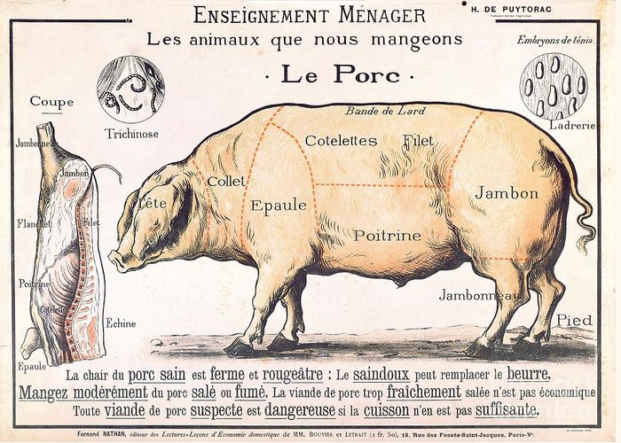 Eating;farm Animals; Cross Section; Loin; Rump; Flank; Butcher; Joint; Pig; Pigs; Shoulder; Ham; Belly; Shoulder; Diagram; Slaughter; Farming; Food Preparation; Domestic Science; Nutrition;teaching;education;home Economics; Farming; Breed;butchering Greeting Card featuring the drawing Cuts Of Pork by French School