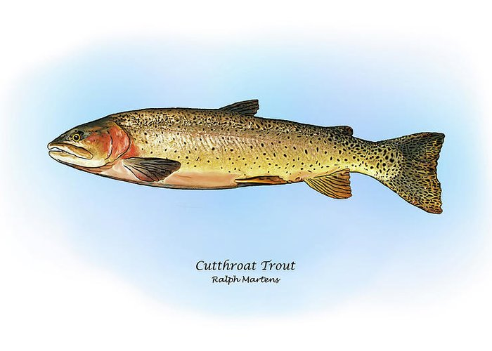 Cutthroat Trout Greeting Card featuring the painting Cutthroat Trout by Ralph Martens