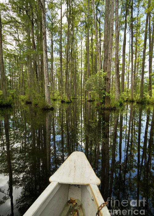 Cypress Gardens Greeting Card featuring the photograph Cypress Garden Swamp by Dustin K Ryan