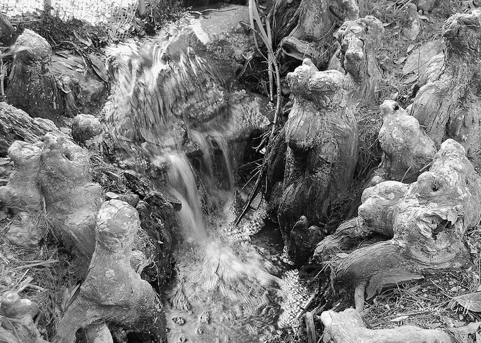 Black And White Greeting Card featuring the photograph Cypress Knees II by Suzanne Gaff